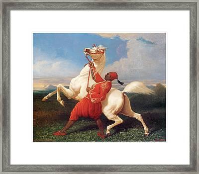Turkish Groom Holding An Arab Stallion Framed Print by Carle Vernet