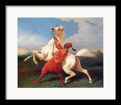 White Stallion With Rider Framed Prints