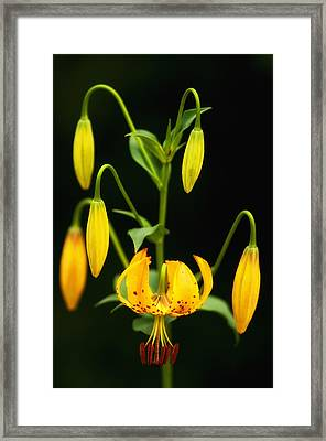 Framed Print featuring the photograph Turks Cap Candelabra by Photography  By Sai