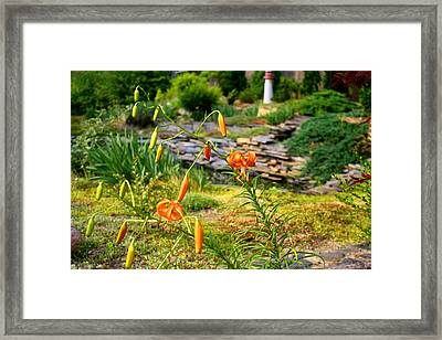 Framed Print featuring the photograph Turk's Cap Lily by Kathryn Meyer