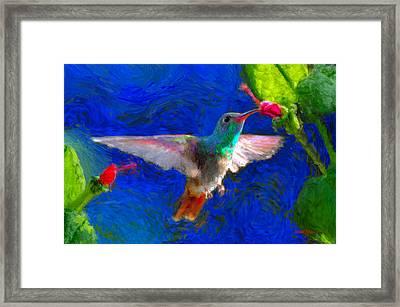 Da052 Turkscap Hummingbird  Framed Print