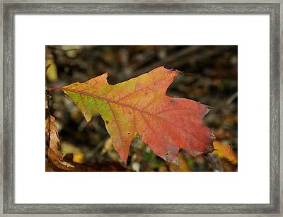 Turn A Leaf Framed Print by JAMART Photography