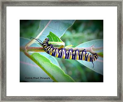 Turning A New Leaf Framed Print