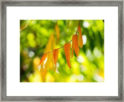 Turning Autumn Framed Print by Aaron Aldrich
