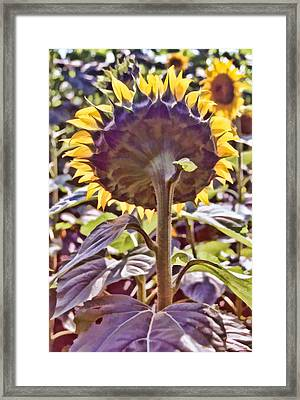 Turning Back Framed Print by Jan Amiss Photography