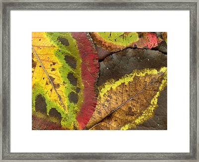 Turning Leaves 2 Framed Print by Stephen Anderson