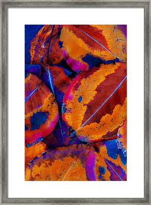 Turning Leaves 5 Framed Print by Stephen Anderson
