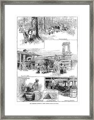 Turpentine Industry, 1884 Framed Print by Granger