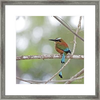 Turquoise Pendant.. Framed Print