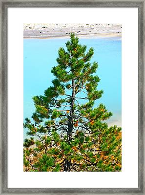 Turquoise Tree Framed Print