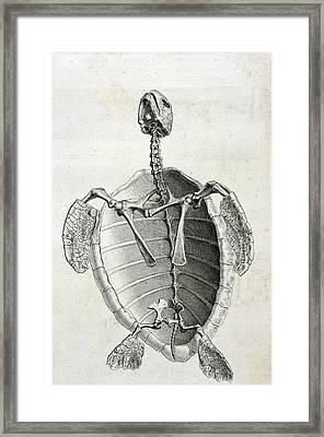 Turtle Anatomy Framed Print
