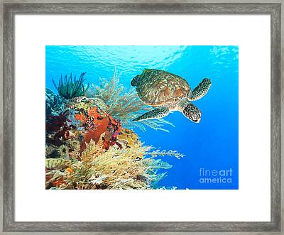Turtle And Coral Framed Print