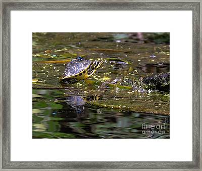 Turtle And His Friend Framed Print