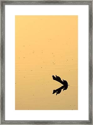 Turtle Art Framed Print