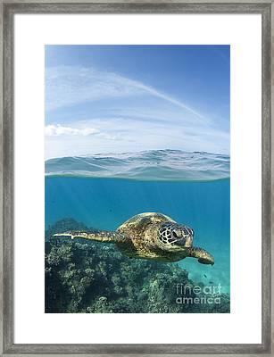 Turtle At Black Rock Framed Print