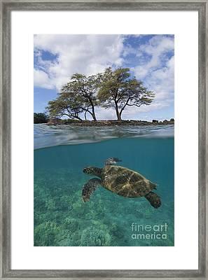 Turtle At Makena Landing Framed Print