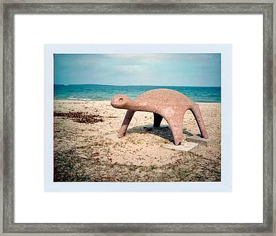 Turtle Framed Print by Brady D Hebert