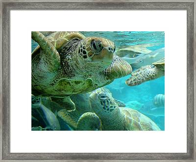 Turtle Center Framed Print by Zinvolle Art