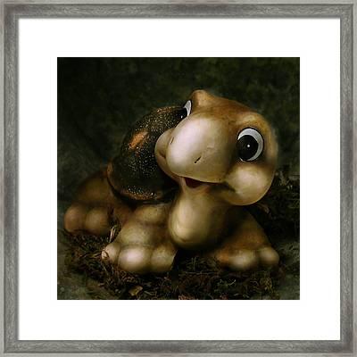 Turtle Framed Print by Diane Bradley