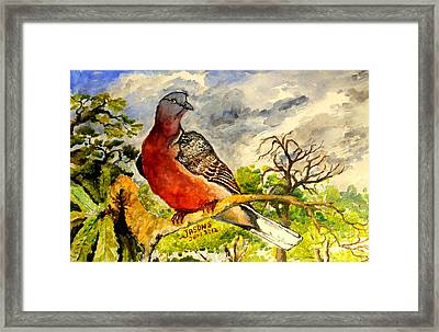 Turtle - Dove Framed Print