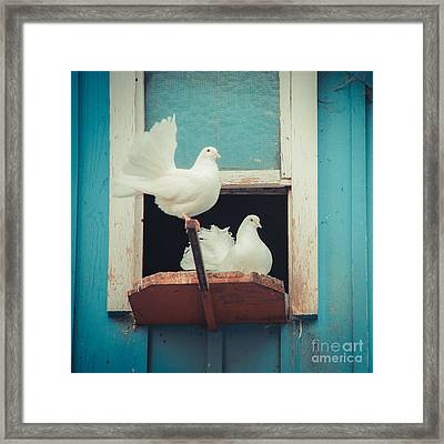 Turtle Doves 1x1 Framed Print by Hannes Cmarits