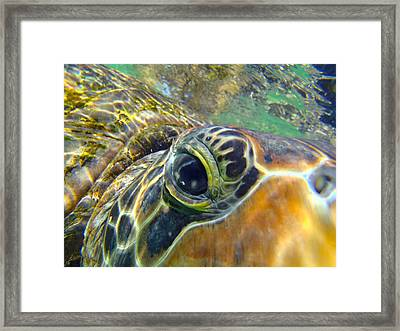 Turtle Eye Framed Print by Carey Chen