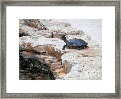 Turtle Eyes Closed Framed Print