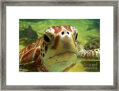 Turtle Face Framed Print by Carey Chen