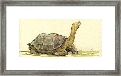 Turtle Galapagos Framed Print