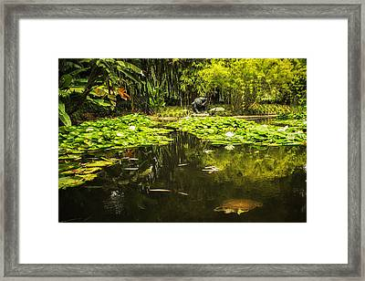 Turtle In A Lily Pond Framed Print