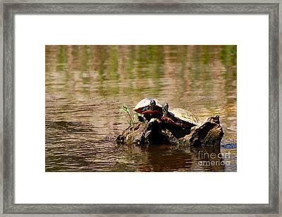 Turtle Log Framed Print by Stuart Mcdaniel