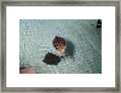 Turtle - National Aquarium In Baltimore Md - 121213 Framed Print by DC Photographer