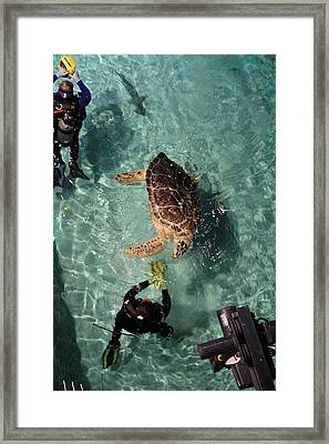 Turtle - National Aquarium In Baltimore Md - 121217 Framed Print by DC Photographer