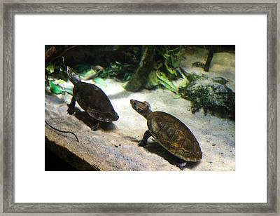 Turtle - National Aquarium In Baltimore Md - 121219 Framed Print by DC Photographer