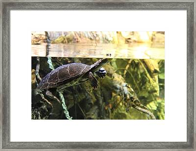 Turtle - National Aquarium In Baltimore Md - 12123 Framed Print