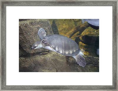 Turtle - National Aquarium In Baltimore Md - 12129 Framed Print