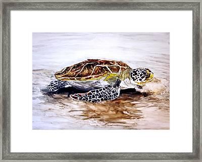 Turtle On The Beach Framed Print