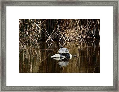 Turtle On Turtle Framed Print