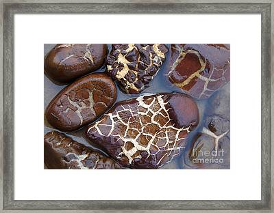 Turtle Or Stone Framed Print
