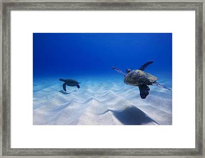 Turtle Pair Framed Print by Sean Davey
