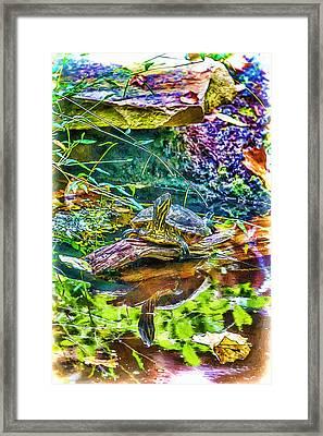Turtle Pond Fall Framed Print by John Haldane