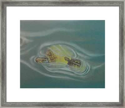 Turtle Pond Iv Framed Print