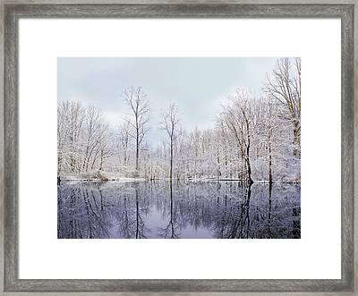 Turtle Pond Framed Print by Kitty Ellis