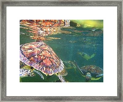 Turtle Reflections Framed Print by Carey Chen