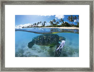 Turtle Snack Framed Print by Sean Davey