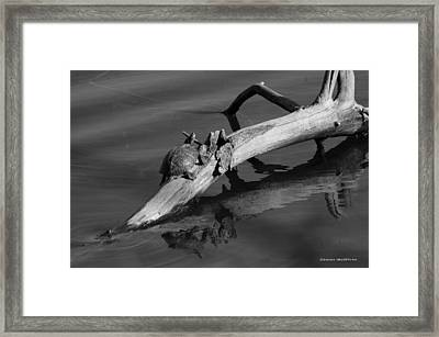 Framed Print featuring the photograph Turtle Sun Bw by Tannis  Baldwin