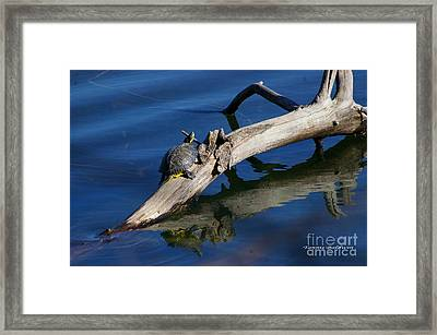 Framed Print featuring the photograph Turtle Sun by Tannis  Baldwin