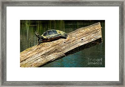 Turtle Sunning On The Log Framed Print