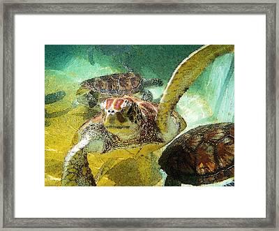 Turtle Swim Framed Print