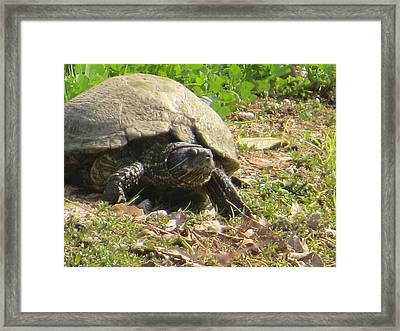Framed Print featuring the photograph Turtle Up Close by Ella Kaye Dickey